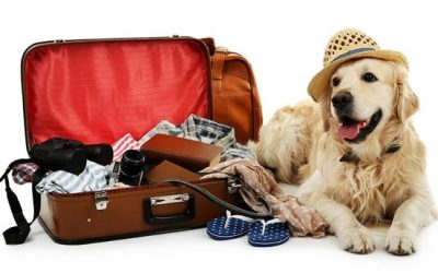 7 Tips for Boarding Your Pet
