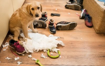 What To Do If Your Animal Has Destructive Behaviors While You're Away